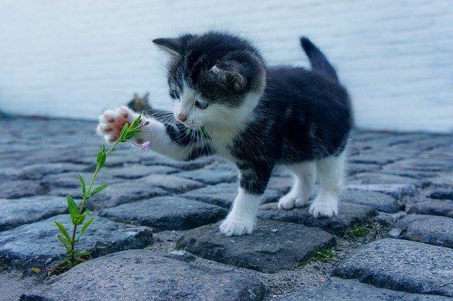 Kätzchen spielt mit einer Blume